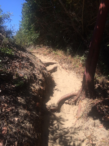 A view of the path I took to get to the coast at Ano Nuevo State Park (photo by Steve Wittich)